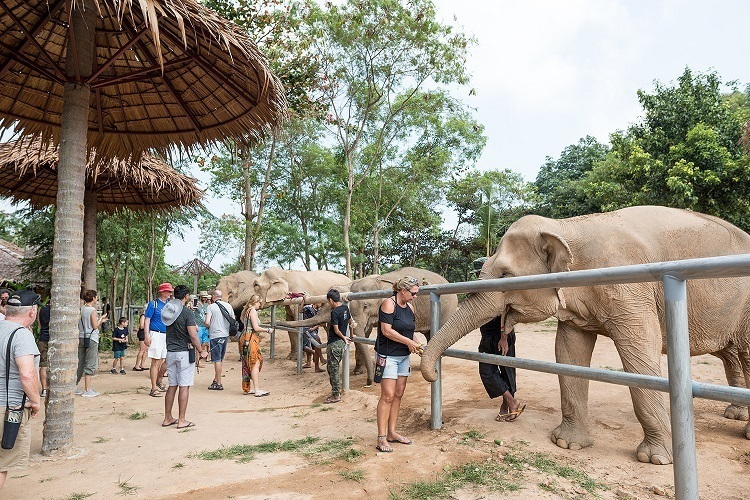 What Can You Expect From an Elephant Sanctuary?